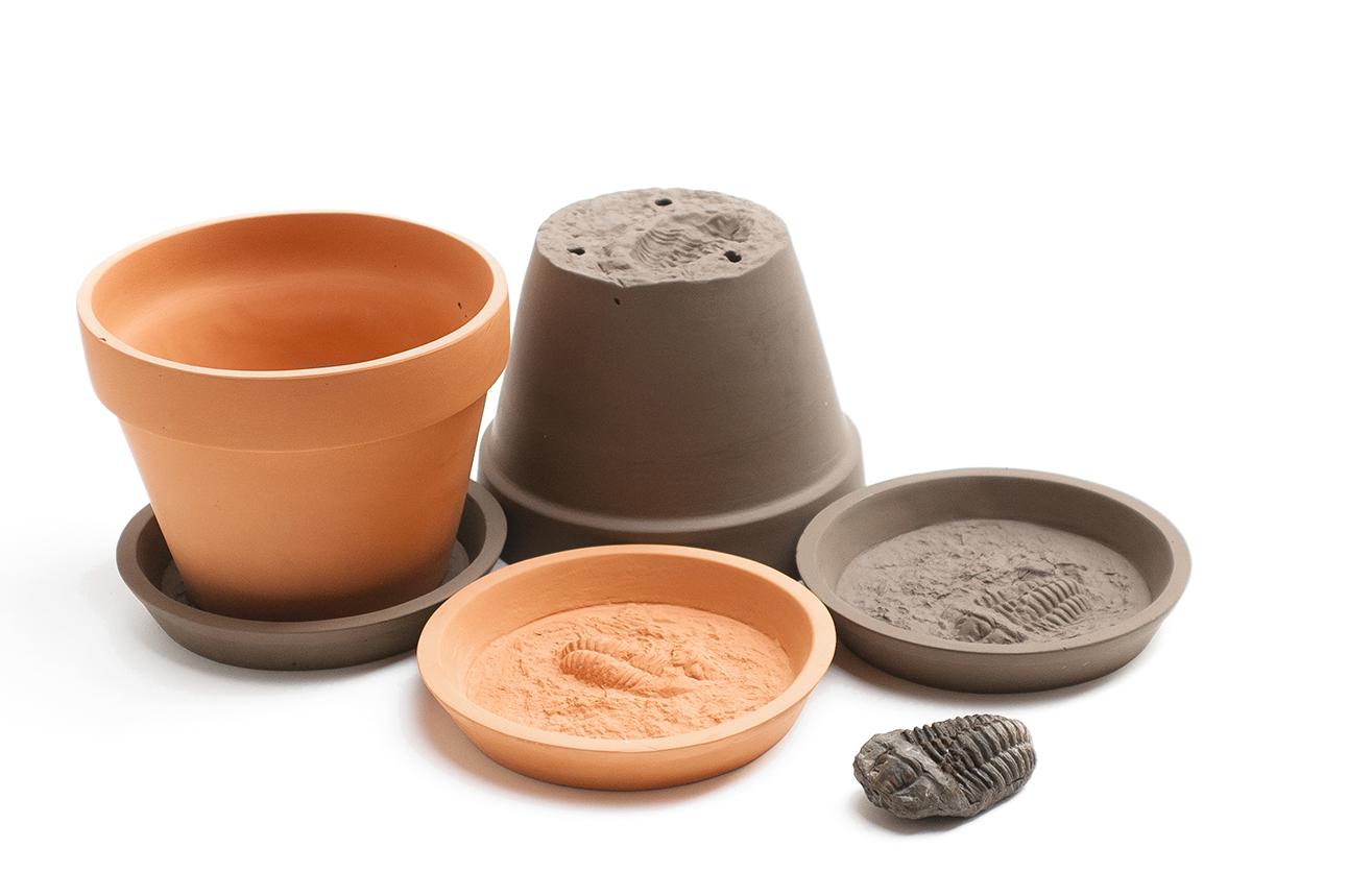 Fossil Pot